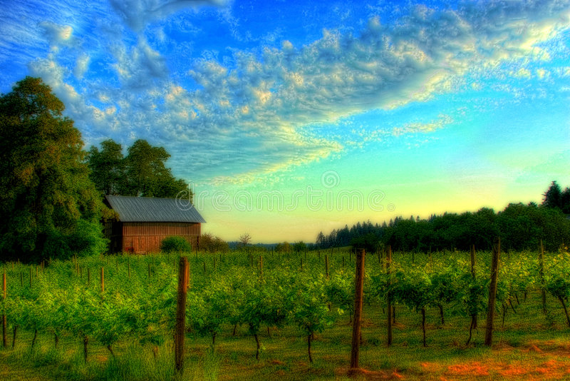 Download Vineyard landscape stock photo. Image of field, spring - 2539004