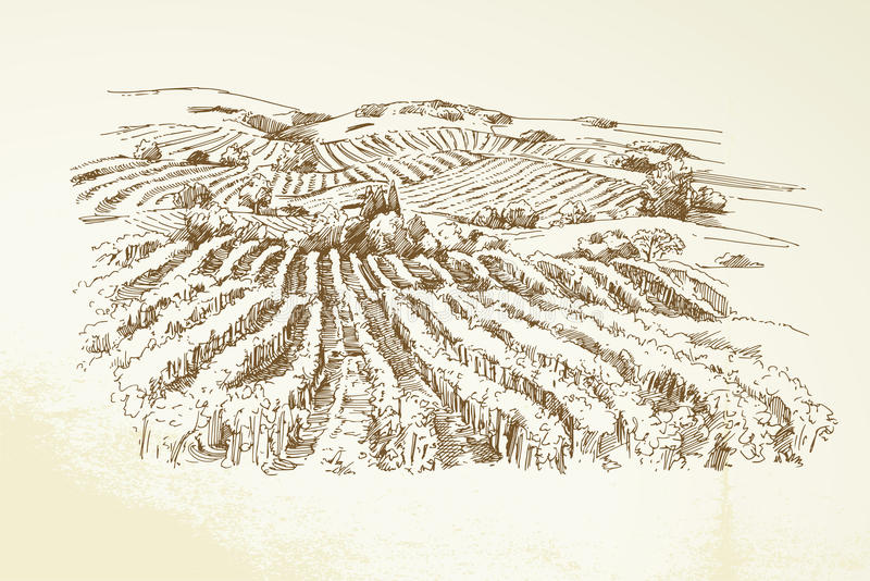 Vineyard Landscape. Hand drawn illustration