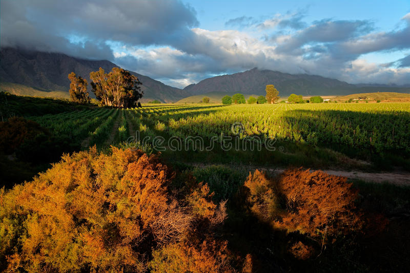 Download Vineyard landscape stock photo. Image of farm, rural - 28869978