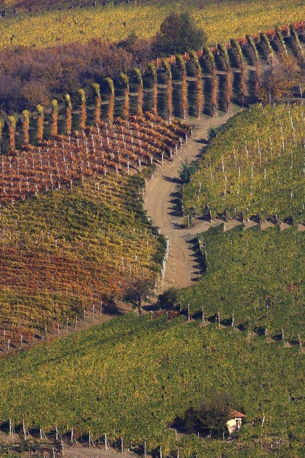 Vineyard landscape in autumn stock image