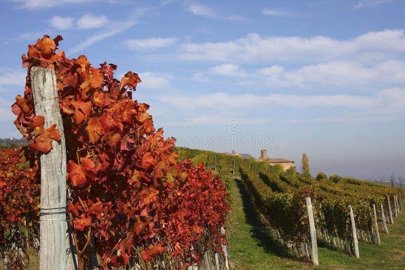 Vineyard landscape in autumn royalty free stock photo
