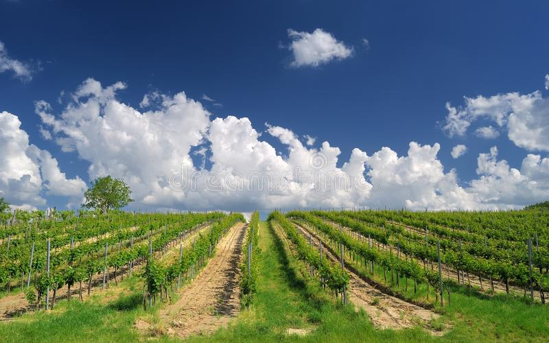 Vineyard landscape with beautiful clouds and blue sky in summer stock photos