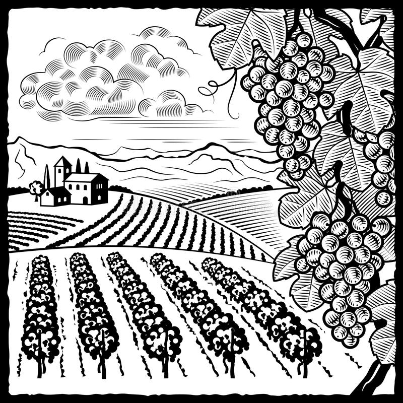 Download Vineyard Landscape Black And White Stock Vector - Image: 19196534
