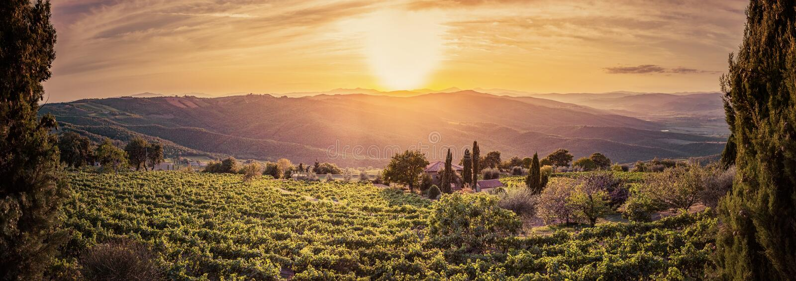 Vineyard landscape panorama in Tuscany, Italy. Wine farm at sunset stock images