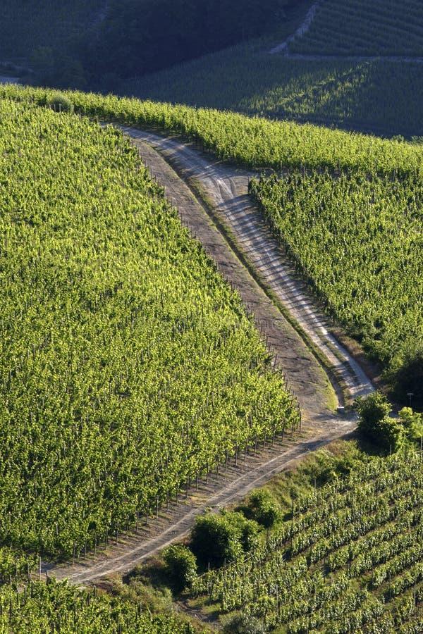 Vineyard landscape summer royalty free stock photo