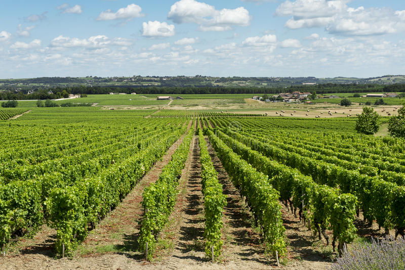 Download Vineyard landscape stock photo. Image of famous, bordeaux - 33028702