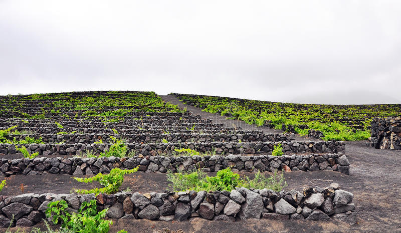 Download Vineyard on Lanzarote stock image. Image of geria, volcanic - 25381123