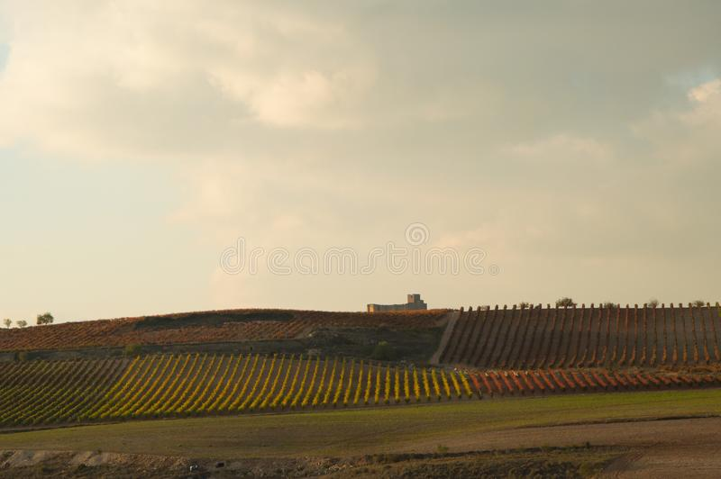 Vineyard lines in autumn with Davalillo Castle at the very back. royalty free stock image