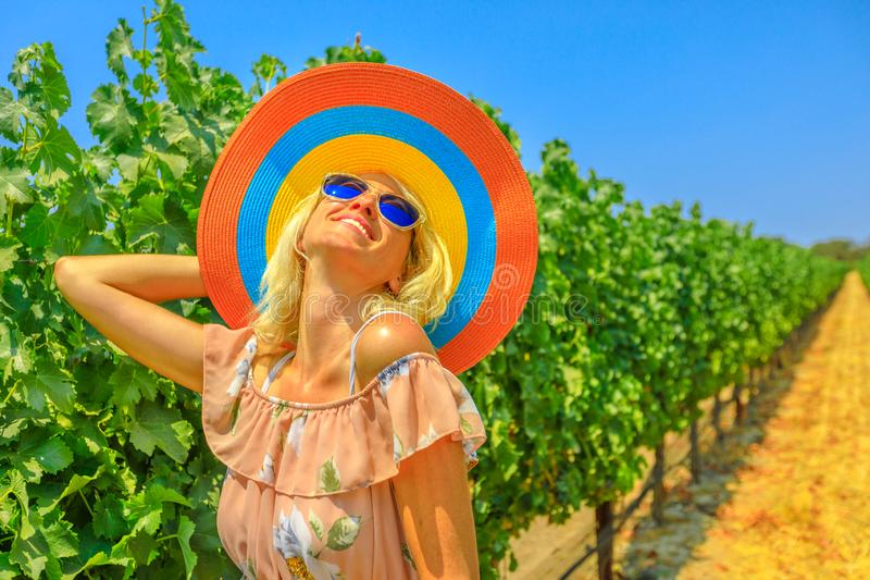 Vineyard Los Olivos stock photo