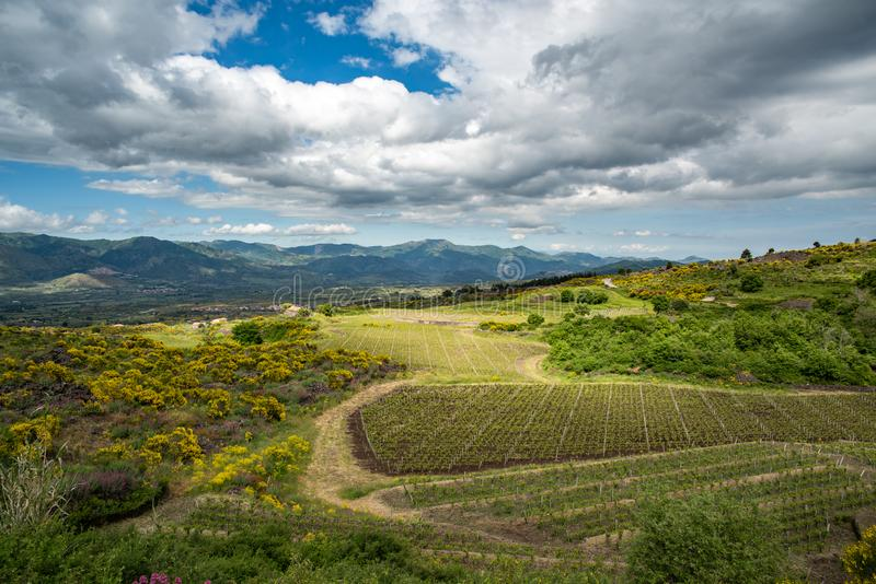 Vineyard of the mount Etna in Sicily, italy stock photos