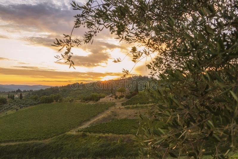 Vineyard near Volpaia town in Chianti region in province of Siena. Tuscany landscape. Italy royalty free stock photography