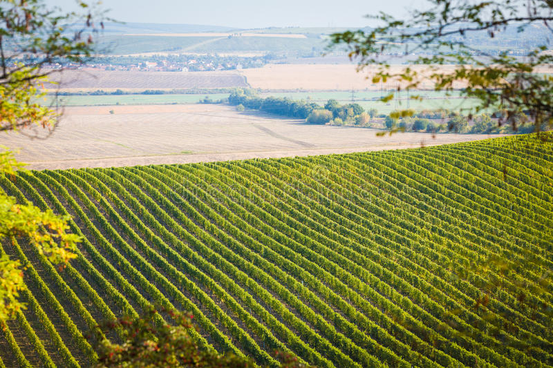 Download Vineyard With Nearby Fields Stock Image - Image: 26005337