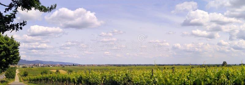 Vineyard Pano Royalty Free Stock Photography
