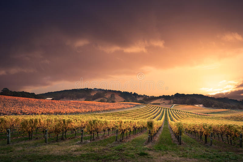 Vineyard Paradise royalty free stock photos
