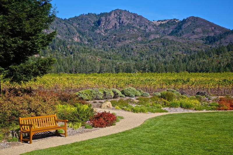 Vineyard St. Francis winery Sonoma. Hiking paths in Sonoma wine country lead to vineyards and mountains stock photo
