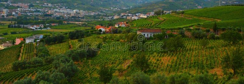 Vineyard at Peso da Regua in Alto Douro Wine Region, Portugal. A UNESCO World Heritage Site royalty free stock image