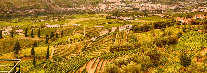 Vineyard at Peso da Regua in Alto Douro Wine Region, Portugal. A UNESCO World Heritage Site stock photo