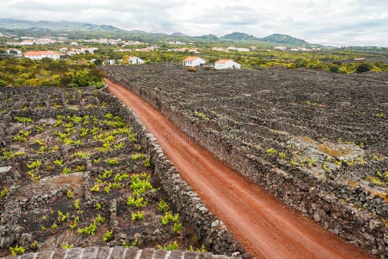 Vineyard on Pico Island. Traditional vineyard with lava walls on Pico Island, Azores royalty free stock photos