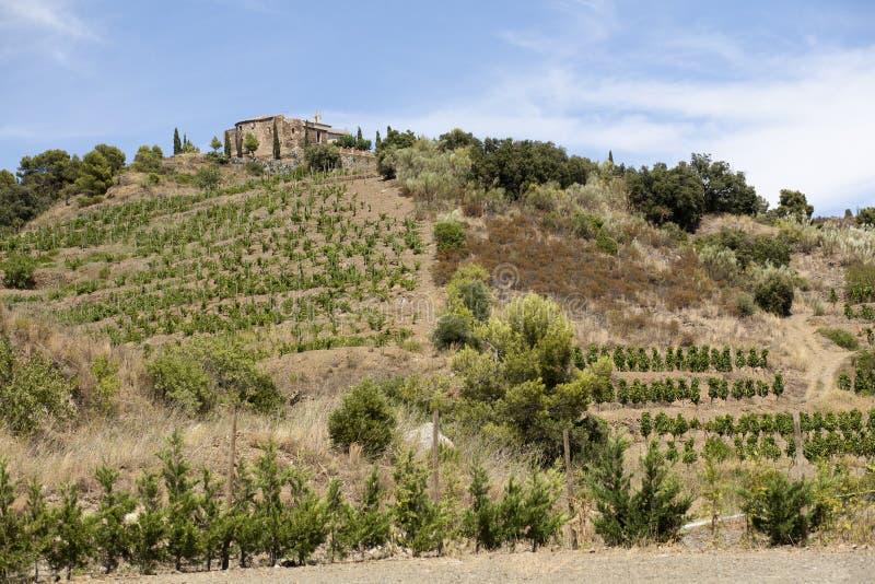 Vineyard in Priorat in Spain royalty free stock photos