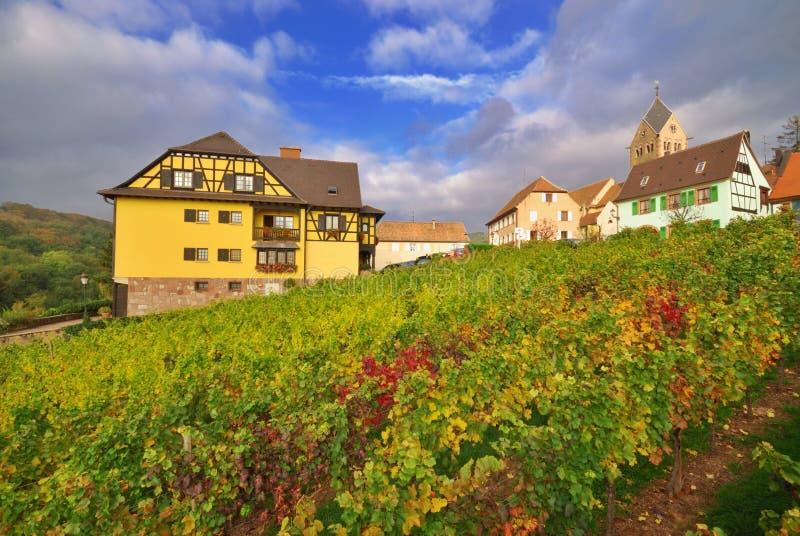 Vineyard after Rain stock photography