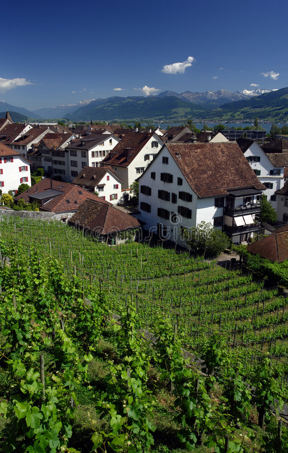 Vineyard in Rapperswil, Switze stock images
