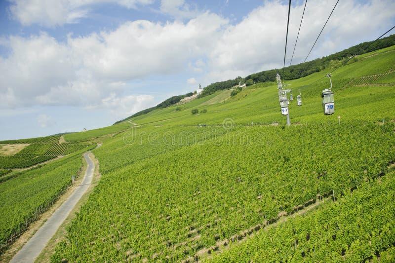 Download Vineyard In Rhine Valley,germany,europe. Stock Image - Image of footpath, germania: 23776173