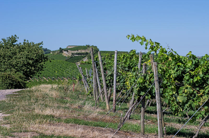 Download Vineyard In Rhineland Palatinate Stock Photo - Image of vineyard, cultivated: 26516998