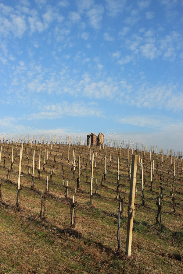 Download Vineyard ruin stock image. Image of valley, agriculture - 23783913
