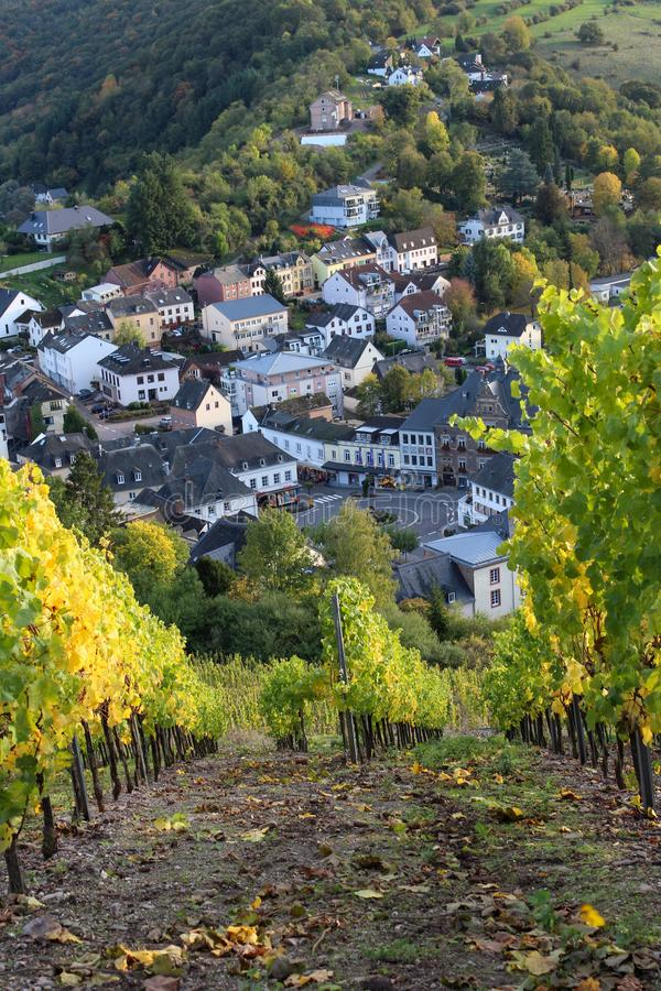 Vineyard in Saarburg, Germany. View from the hill with rows of grapes plants on the town of Saarburg. October, autumn, green and yellow leaves. Vertical royalty free stock photography