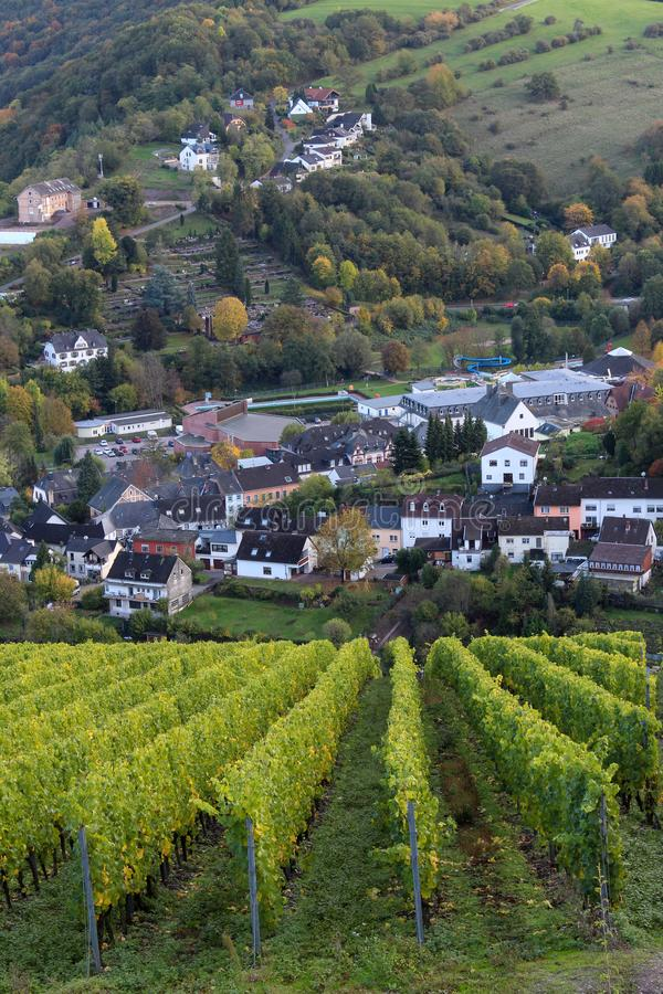 Vineyard in Saarburg, Germany. View from the hill with rows of grapes plants on the town of Saarburg. October, autumn, green and yellow leaves. Vertical royalty free stock photo