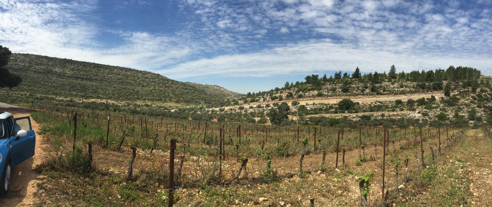 Download A vineyard stock photo. Image of blue, green, israel - 83708448