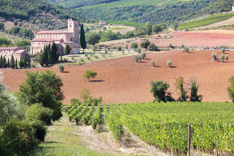 Download Vineyard In Sant Antimo, Tuscany, Italy Stock Photo - Image: 20849202