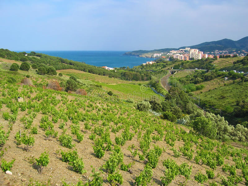 Vineyard And Sea Stock Image