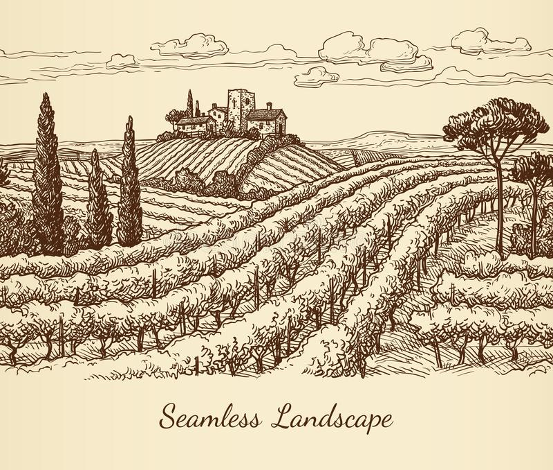 Vineyard seamless landscape. Ink sketch. Hand drawn vector illustration royalty free illustration