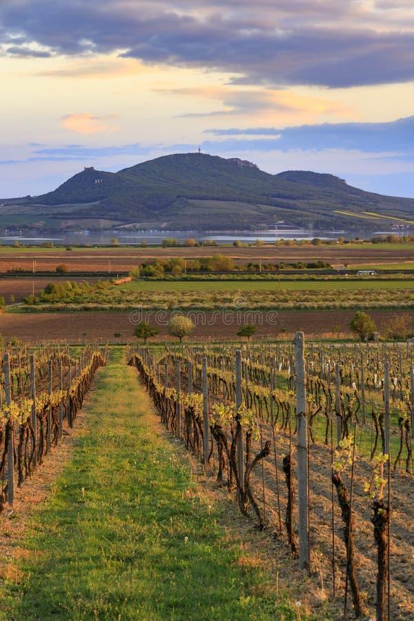 Vineyard Sonberk and Palava hills, Moravia Południowa, Czechy fotografia stock
