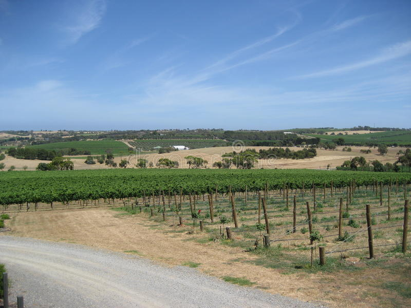 Vineyard In South Australia Stock Image - Image of gs, fields ...