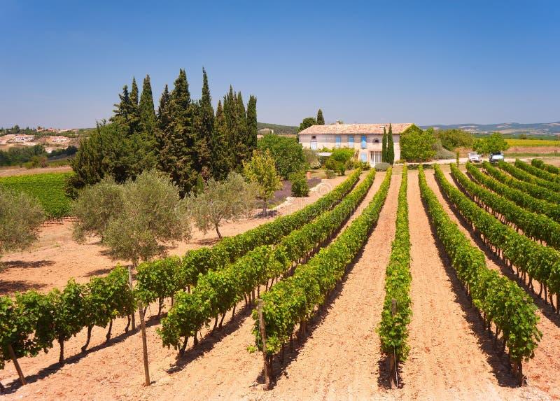 Vineyard, South of France stock photos