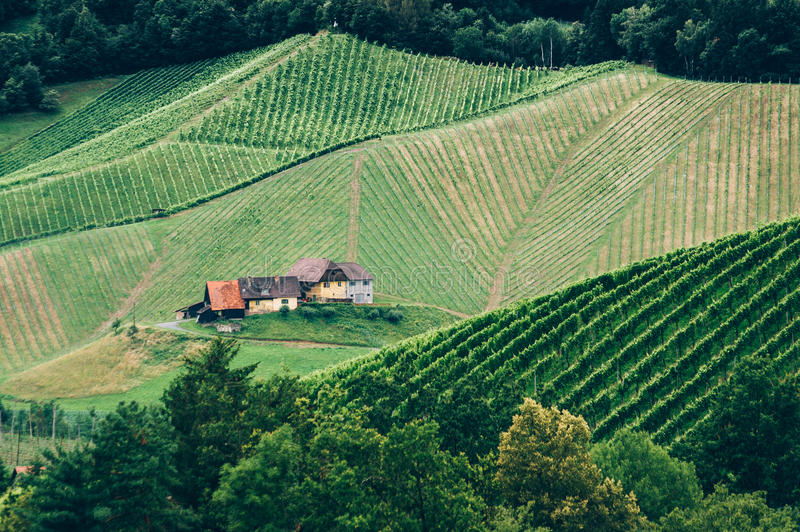 Vineyard in Styria. At Summer with a Farmhouse stock photos