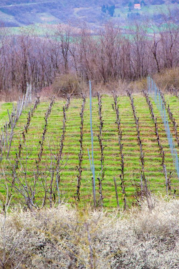Vineyard surrounded by agricultural fields royalty free stock images