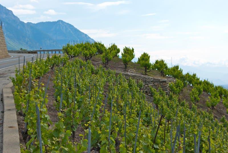 Vineyard terraces stock photos
