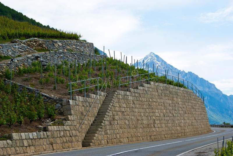 Vineyard terraces royalty free stock photo