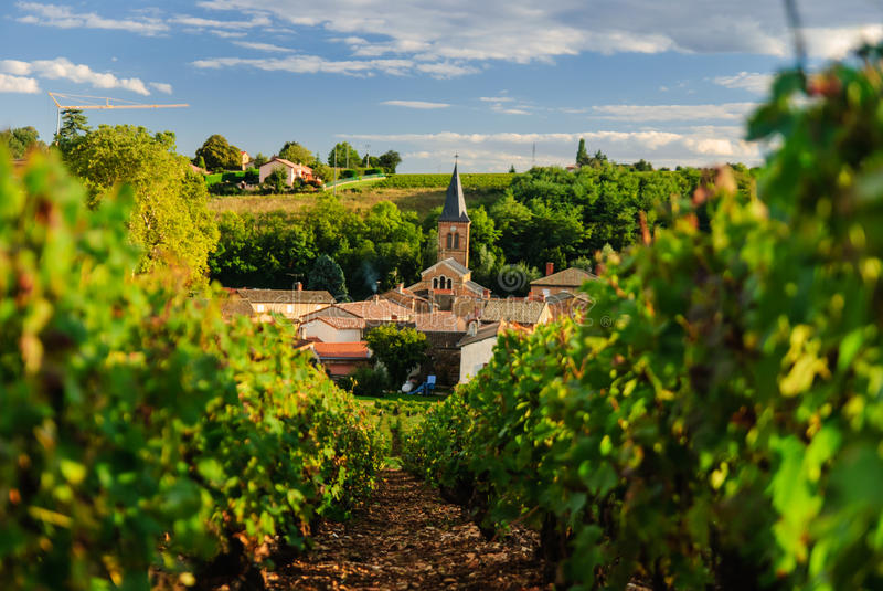 Vineyard and the town of Saint Julien, region Beaujolais, France royalty free stock images