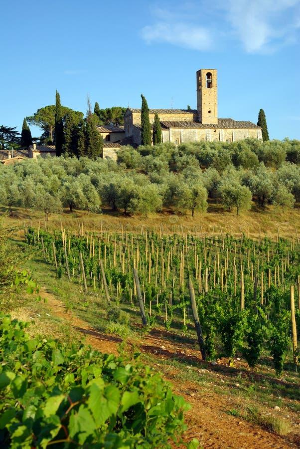 Vineyard in Tuscany, Italy royalty free stock photos