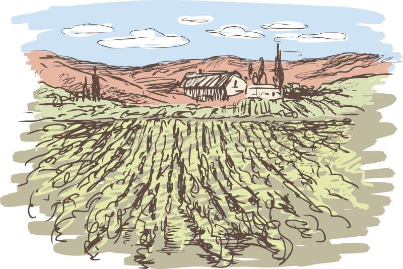 Vineyard. Vector sketch of vineyard landscape stock illustration