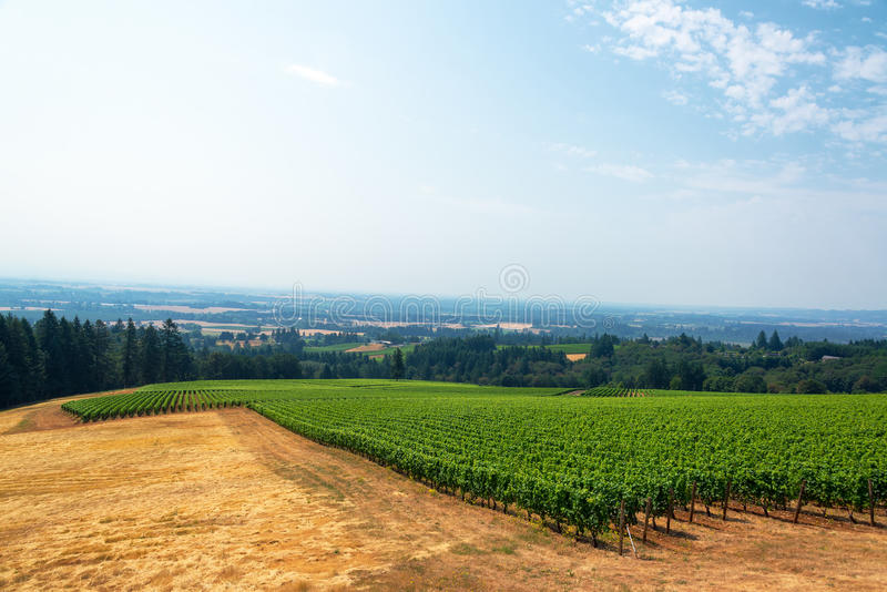 Vineyard and Willamette Valley. View of a vineyard with the Willamette Valley below in Oregon wine country royalty free stock images