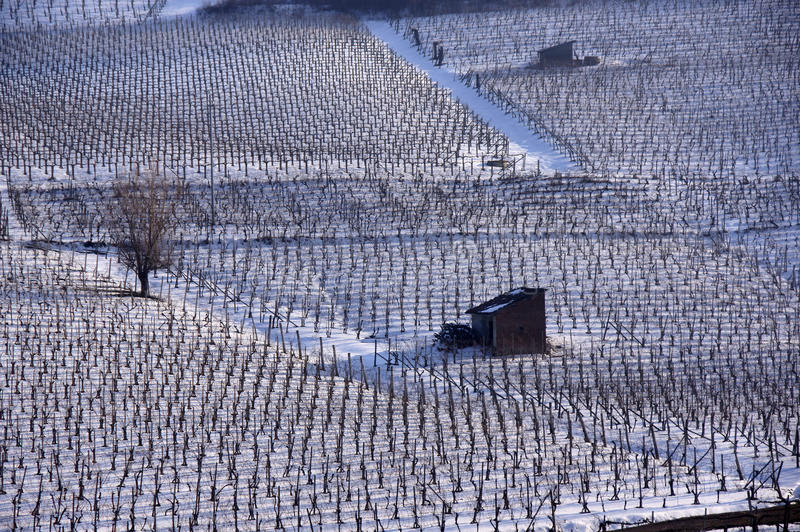 Vineyard in winter stock photos