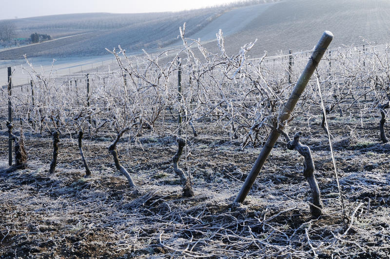 Download Vineyard In Winter Royalty Free Stock Photography - Image: 34445087