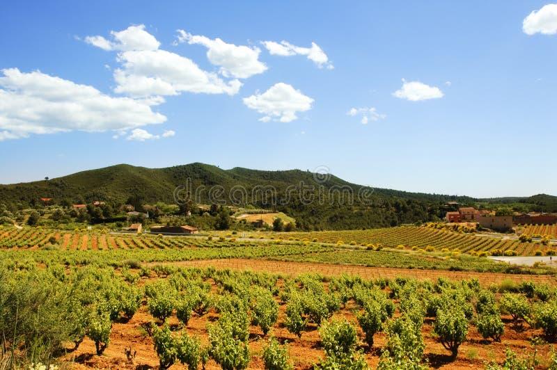 Download Vineyards stock photo. Image of montferri, grapevine - 12659356