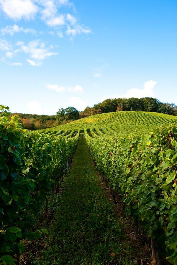 Free Vineyards Stock Image - 12958691