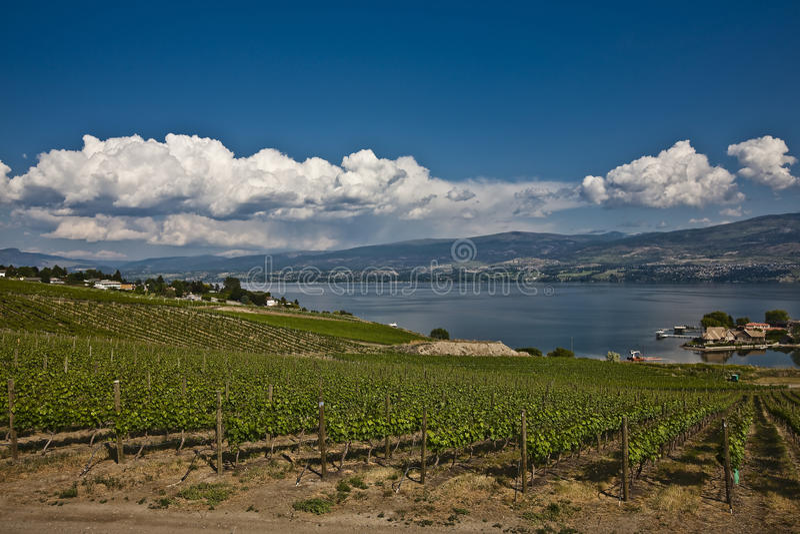 Download Vineyards stock image. Image of rural, okanagan, vineyards - 13047529